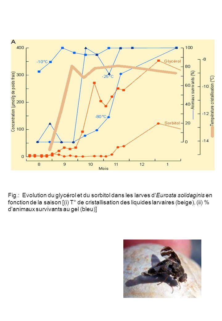 Fig.: Evolution du glycérol et du sorbitol dans les larves d Eurosta solidaginis en fonction de la saison [(i) T° de cristallisation des liquides larvaires (beige), (ii) % d animaux survivants au gel (bleu)]